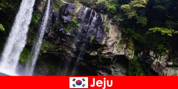 Чеджу в Южна Корея, субтропичният вулканичен остров със спиращи дъха гори за чужденци
