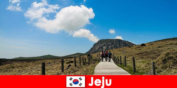 Туристите се разхождат из фантастичния природен пейзаж в Чеджу, Южна Корея