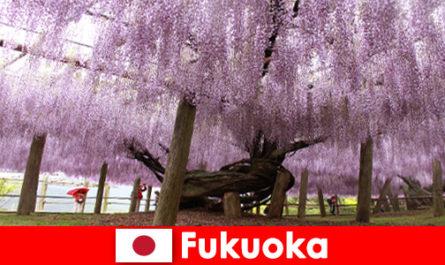 Природни пътувания за непознати сред непокътнатата природа на Япония Фукуока