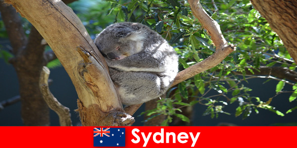 Дестинация Сидни Австралия в екзотичния зоопарк с опит за една нощ