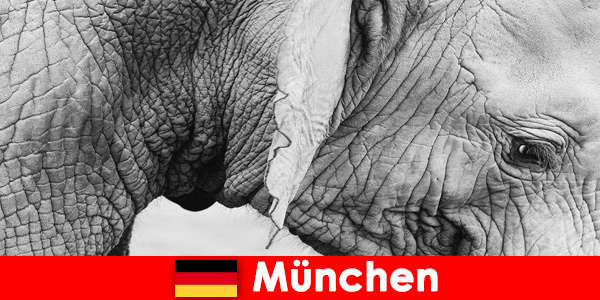 Специално пътуване за посетителите до най -оригиналния зоопарк в Германия, Мюнхен
